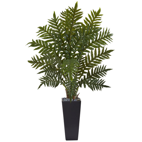4.5' Evergreen Plant in Black Planter