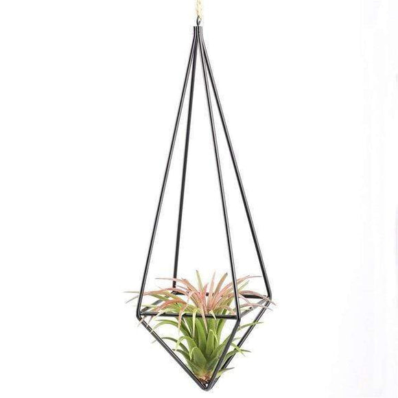 Hanging Air Plants Rustic Stands