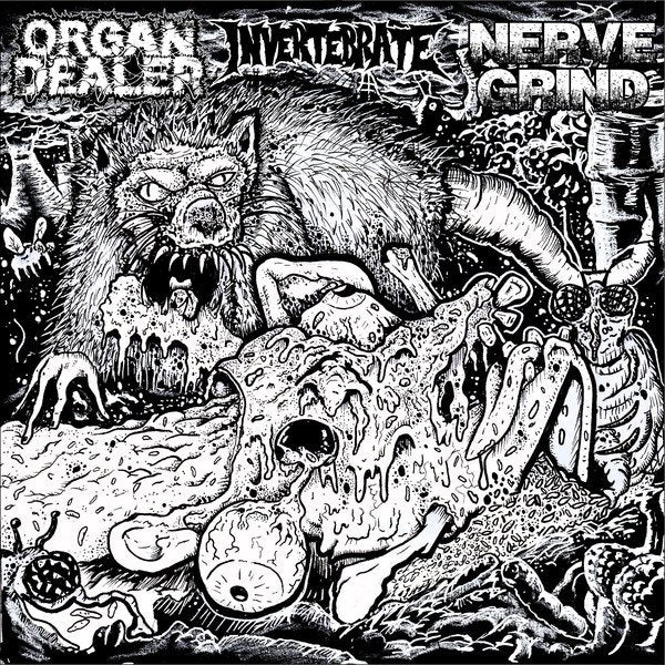 ORGAN DEALER / NERVE GRIND / INVERTABRATE split 7