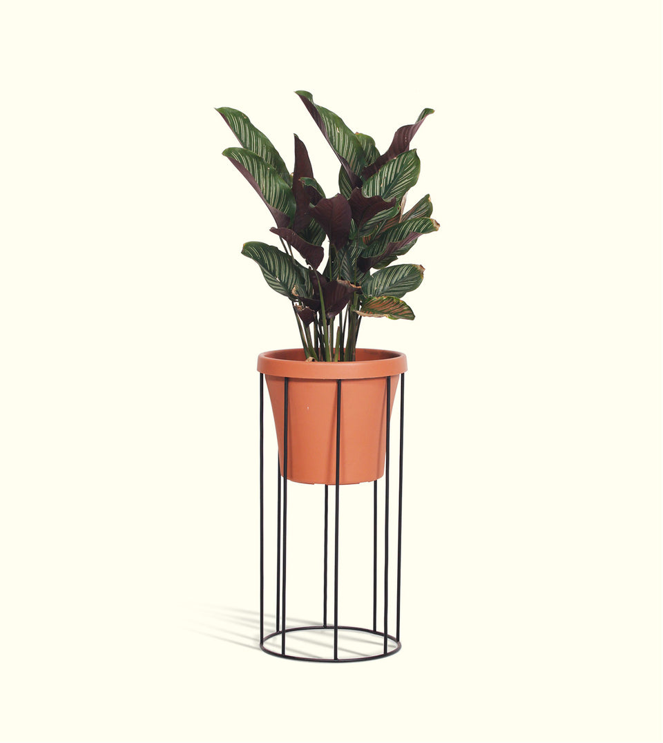 Column Pot Plant Stands