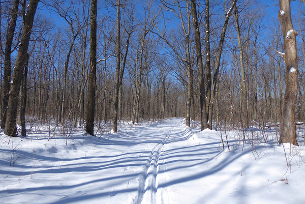 Winter Adventure Getaways in Moshannon State Forest, PA