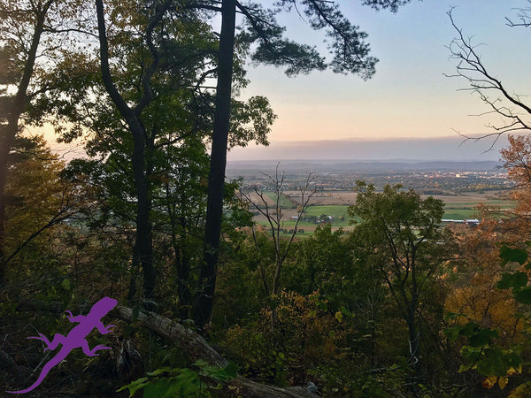 Lion's Valley Vista and the Huckleberry Loop: Lizard Maps Newest Vista in Rothrock