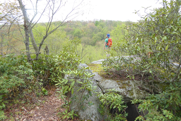 Three Lizards in three miles: sweet vistas and cool streams in Quehanna