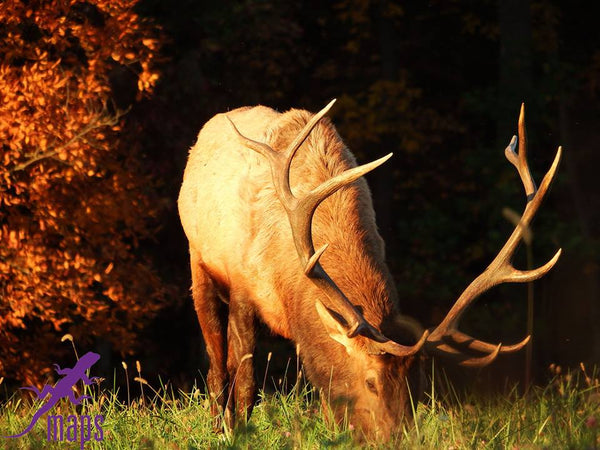Prime Time For Elk: The Elk Scenic Drive And A Moshannon-Quehanna Wildlife Adventure
