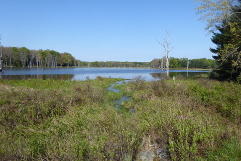 Moshannon State Forest View