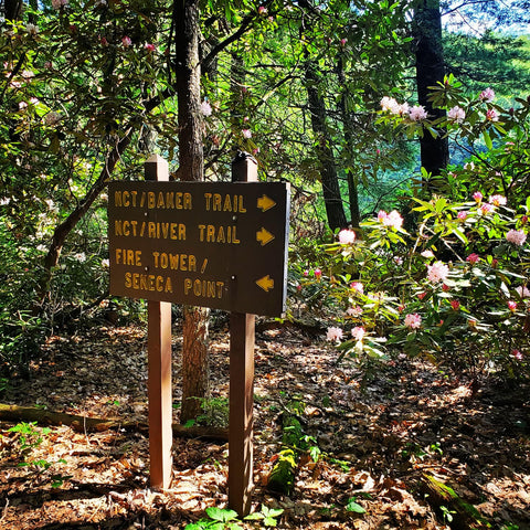Cook Forest Trails