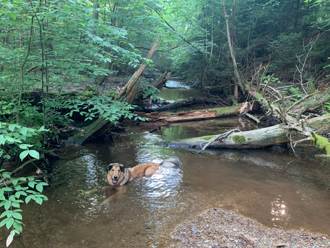 Karma cooling off in the creek