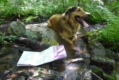 Karma the Adventure Dog and his Lizard Map taking a rest by a stream