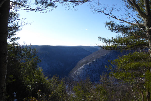 Upper Pine Bottom Run Vista from Tiadaghton Trail Tiadaghton State Forest PA