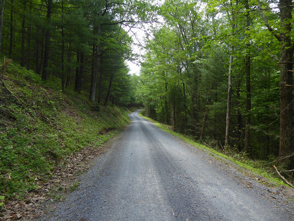 Havice Valley Road Bald Eagle State Forest PA