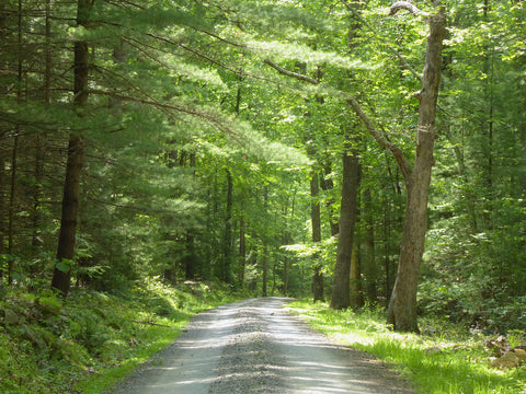 Explore the Forest Roads