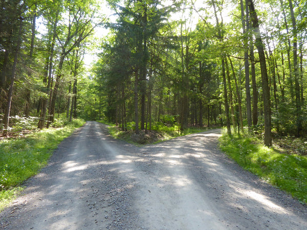 Weikert Road and Hunter Road Bald Eagle State Forest PA