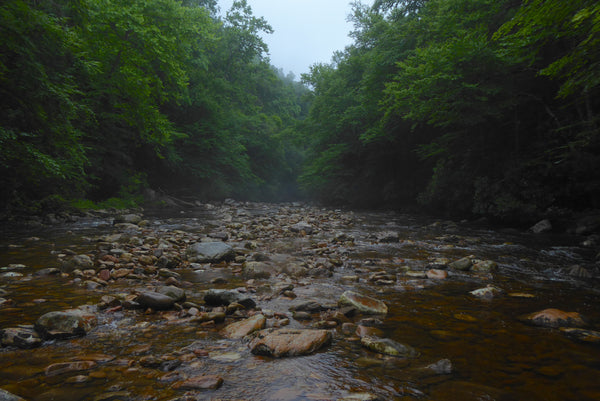 Otter Creek Wilderness WV