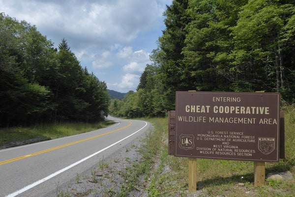 Cheat Wildlife Management Area WV