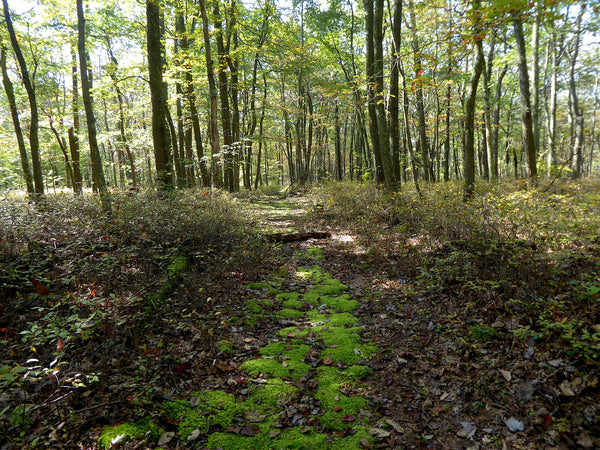 Crownover Trail Rothrock State Forest PA