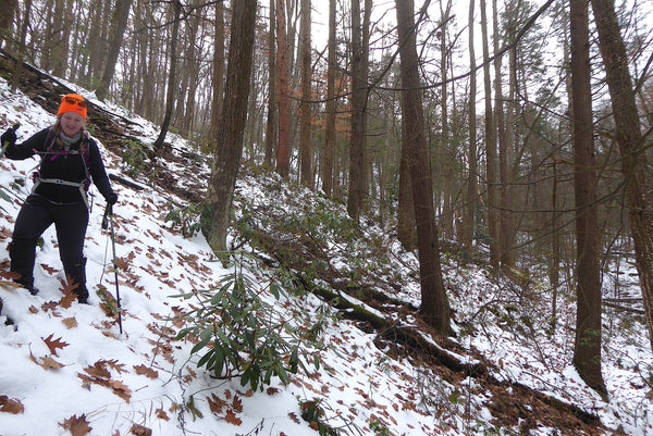 Bushwhacking in Rothrock State Forest PA