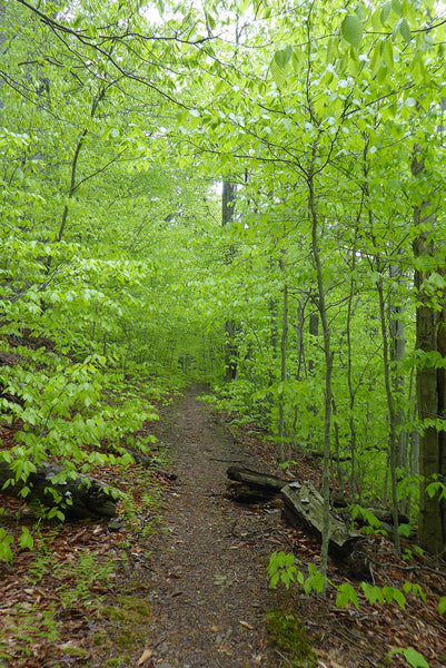 Old Loggers Path Loyalsock State Forest PA