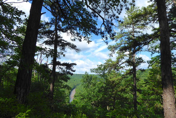 Red Moshannon River Allegheny Front Trail Black Moshannon State Park Moshannon State Forest