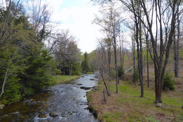 Upper Misquito Creek Quehanna Wild Area Moshannon State Forest PA