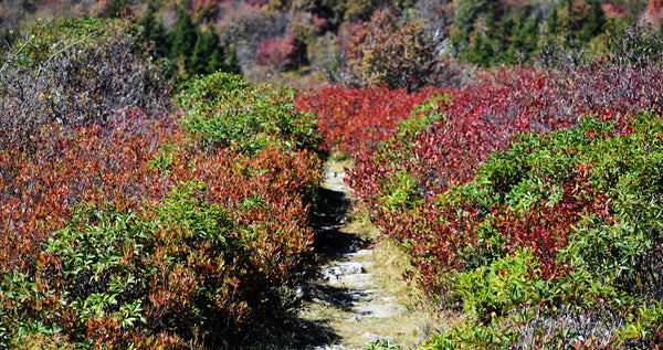 Dolly Sods Monongahela National Forest hiking overlanding backpacking West Virginia WV