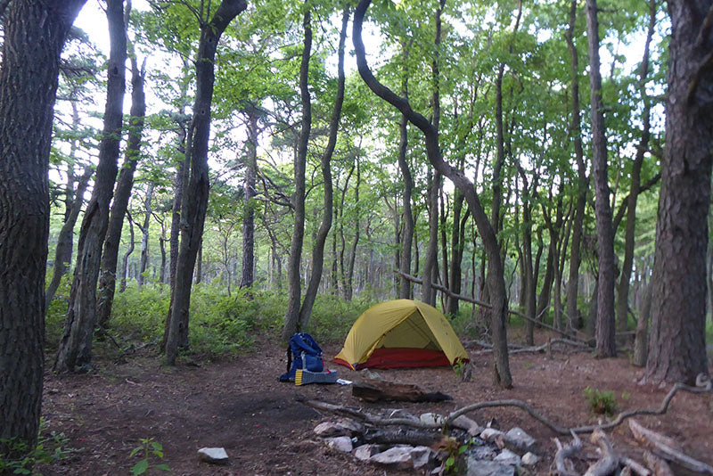 Camping in Michaux State Park: Photo Purple Lizard Maps