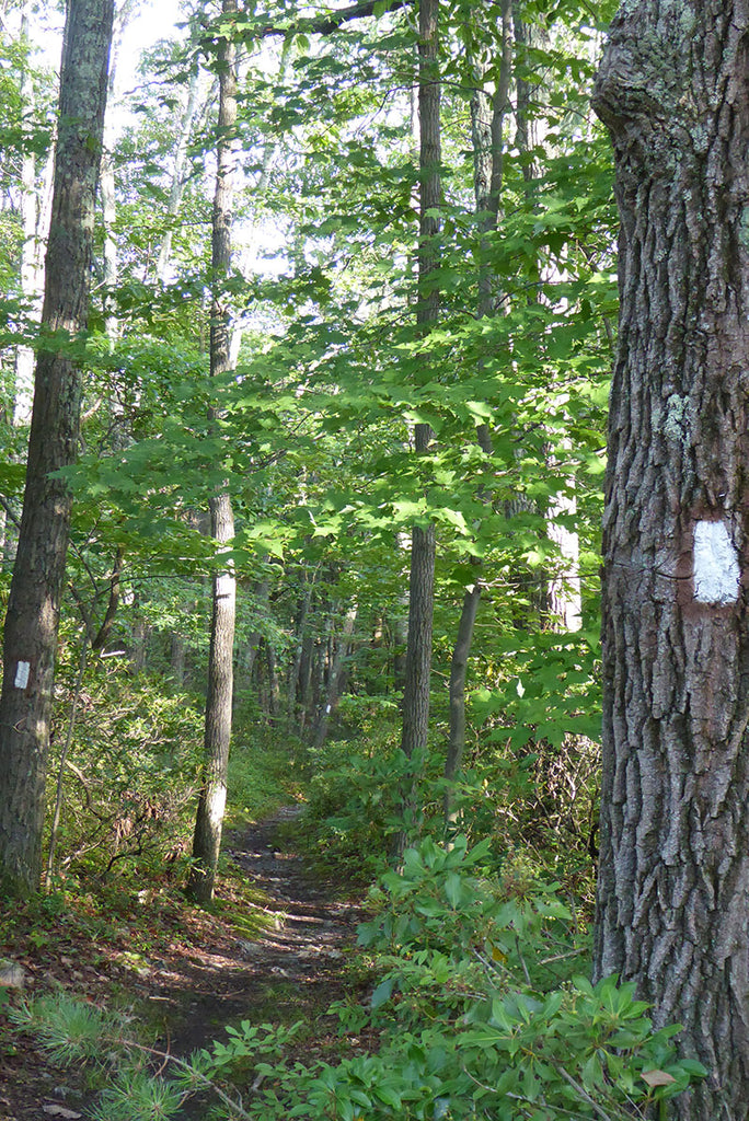 Trail in Michaux State Forest: Photo Purple Lizard Maps
