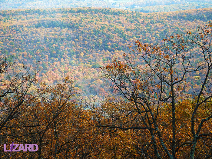 Michaux State Forest View Fall: Purple Lizard Maps