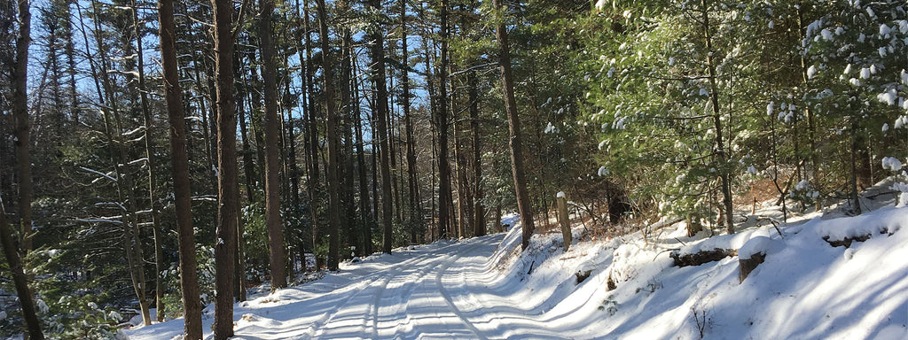Rothrock Roads Winter
