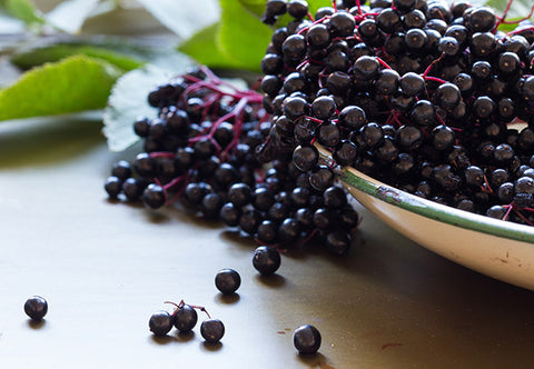 Image of Elderberry Powder (Flu & Cold)