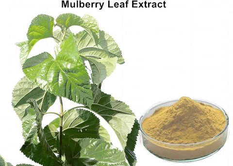 Image of White Mulberry Leaf Extract 30 Capsules 4:1