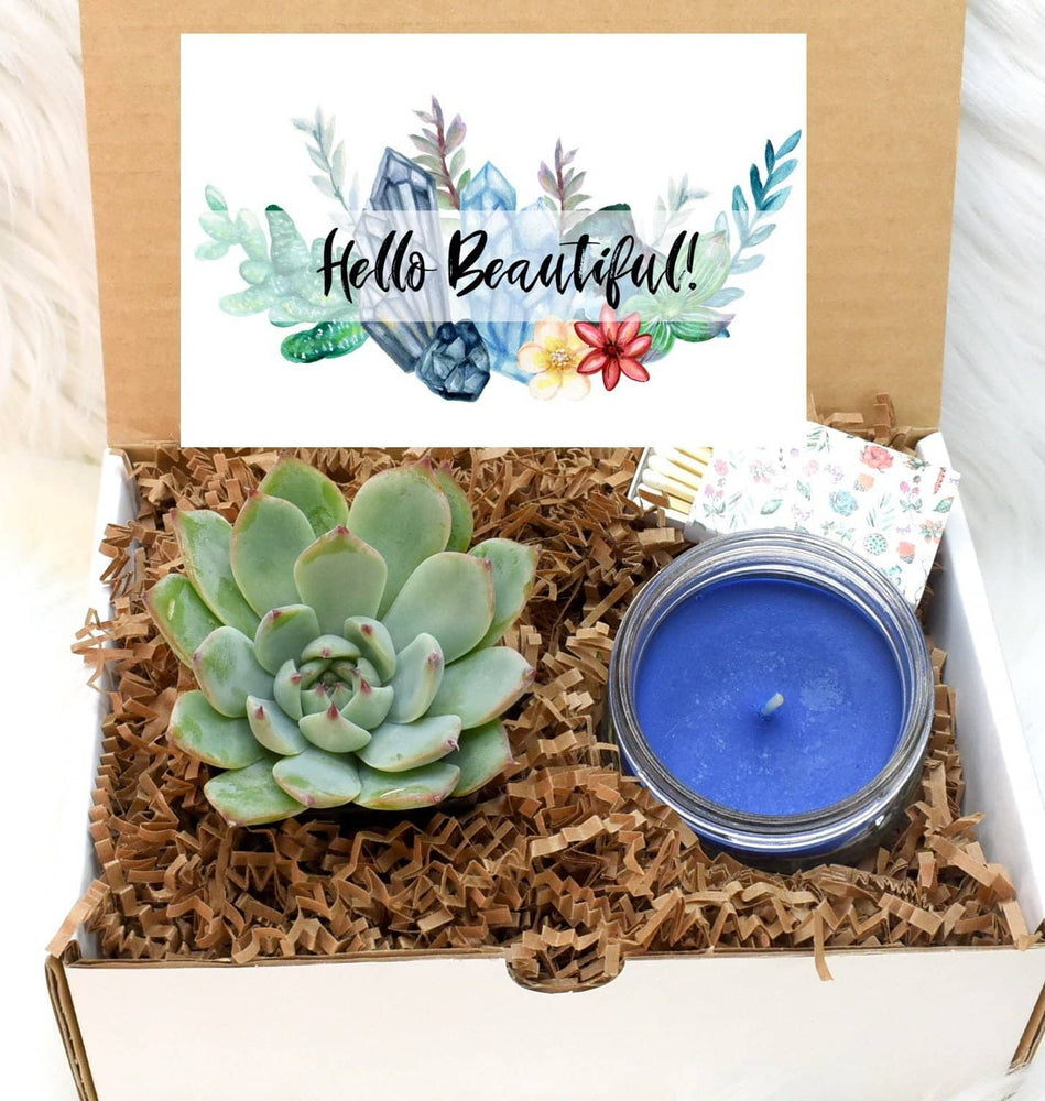 Hello Beautiful Succulent Gift Box (XBC6)