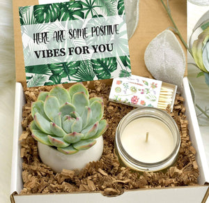Positive Vibes For You Gift Box with Live Succulent (XBF9)