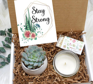 Stay Strong Gift Box with Live Succulent (XBM7)