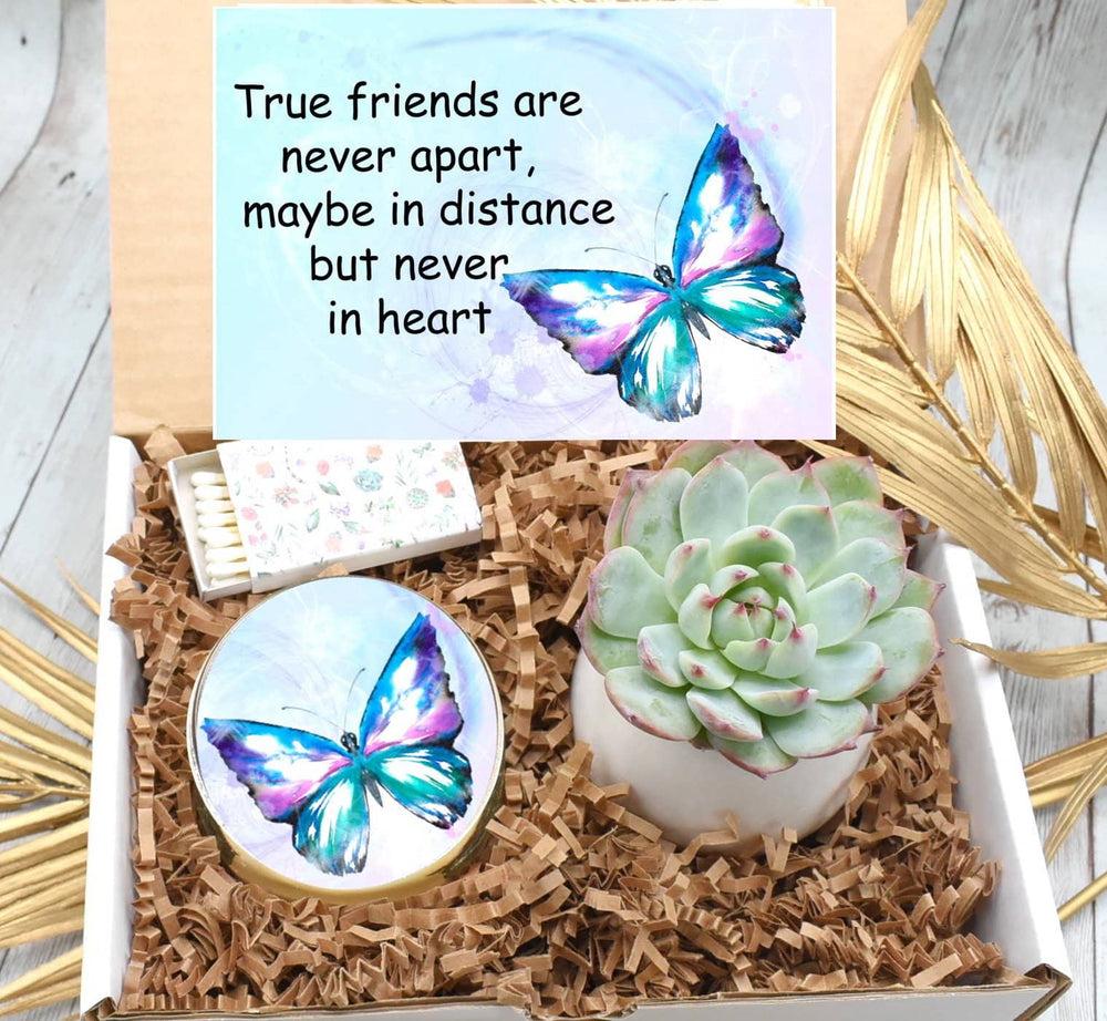 Friendship Gift Box with Live Succulent (XBK2)