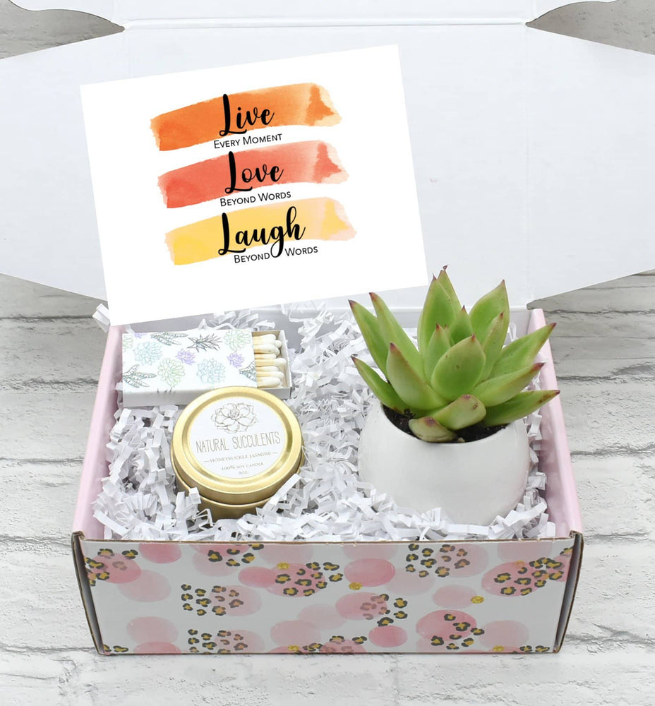 Cheer Up Gift Box with Live Succulent  (XFH2)