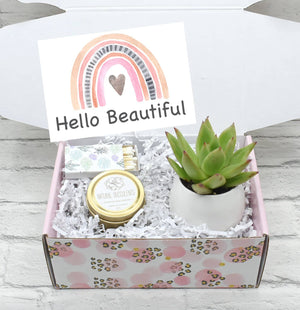 Hello Beautiful Succulent Gift Box (XFK1)