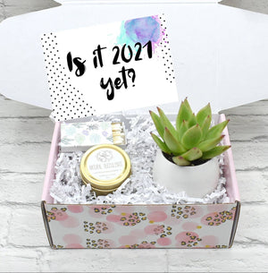 Is It 2021 Yet Succulent Gift Box (XFK8)