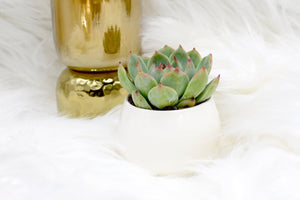 Thinking Of You Gift box with Live Succulent (XBL9)