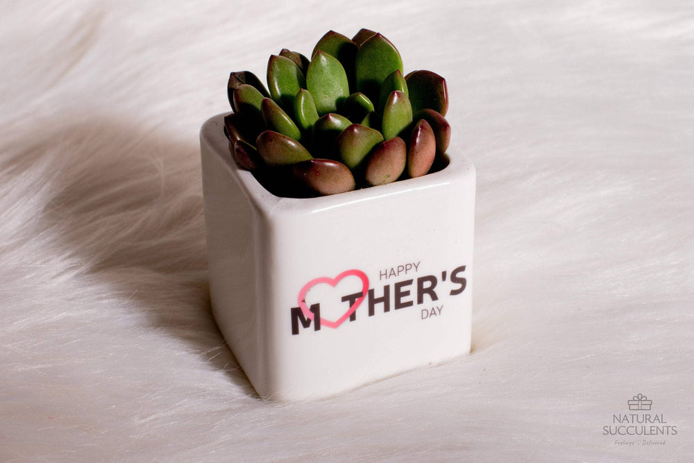 Plant Mom Gift - Personalized Gift Pot with Succulent, Gift for her, Gift for him, Office gift, Office Decor, Succulent Gift