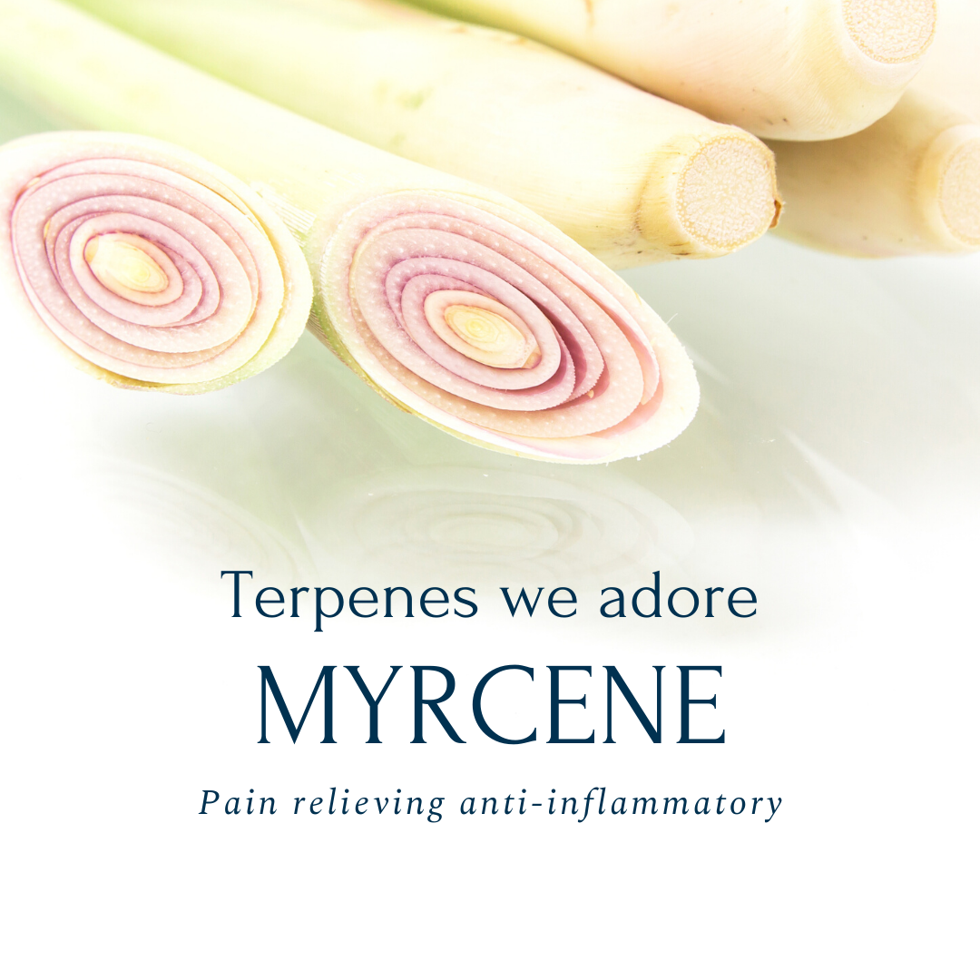 Terpene spotlight: Myrcene - Green Bee Botanicals