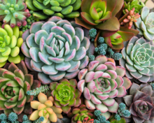 Sensitive Succulents Paint by Number Kit