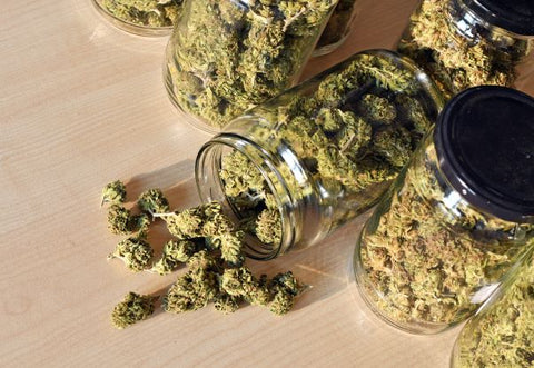 drying and curing cannabis in jars