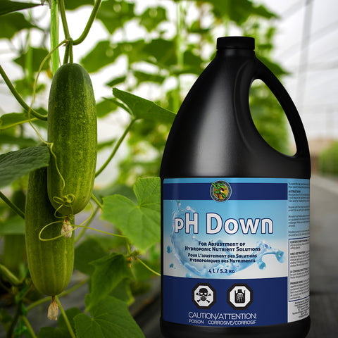 A bottle of pH Down stands beside a fresh pickle