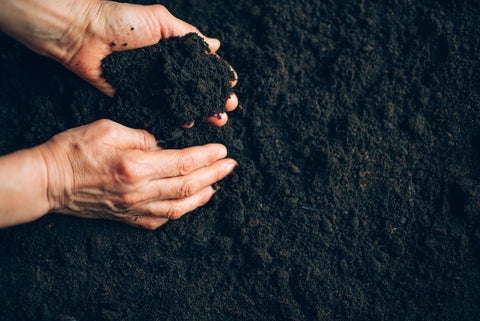 Grower holding soil in their hands to check for moisture levels