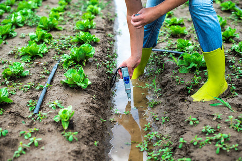 Grower testing soil nutrient levels outdoors