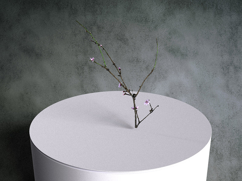 Peach Tree Twig with buds 02