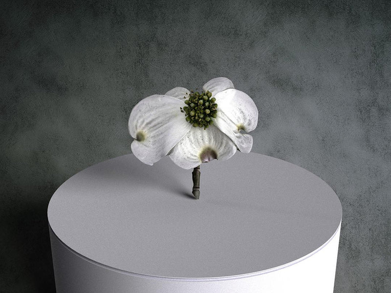 Flowering Dogwood 05