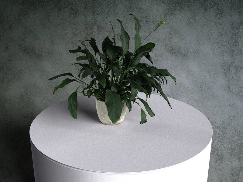 Peace Lily (Spathiphyllum) in Pot