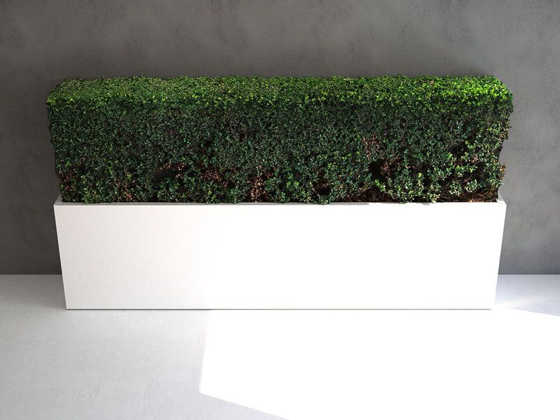 Simulat 3d Model: Buxus Sinica Hedge