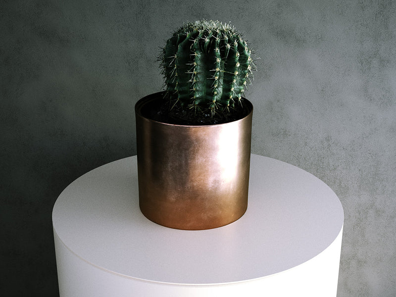 Eriosyce Cactus in Metal Pot